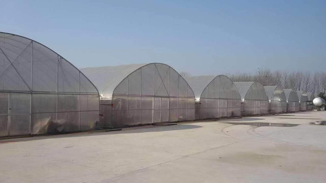 山东潍坊宁夏大跨度日光温室高温棚4米后墙、PO... - 中国供应商