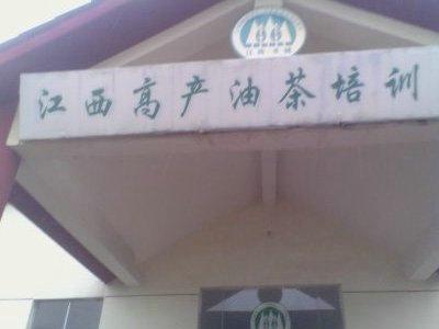 豐城市白土鎮崗下高產油茶專業合作社