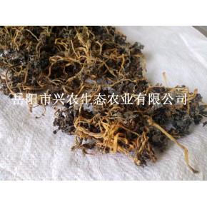 工廠直銷湖南干馬齒莧無泥無沙無鹽