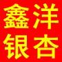 邳州市港上鑫洋銀杏苗木種植專業合作社