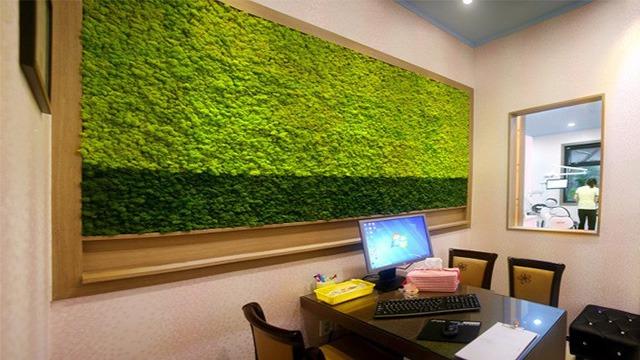永生苔藓植物墙案例装修效果