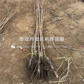 泰安超群苗木有限公司