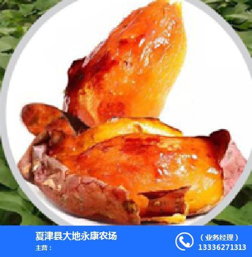 夏津县大地永康农场