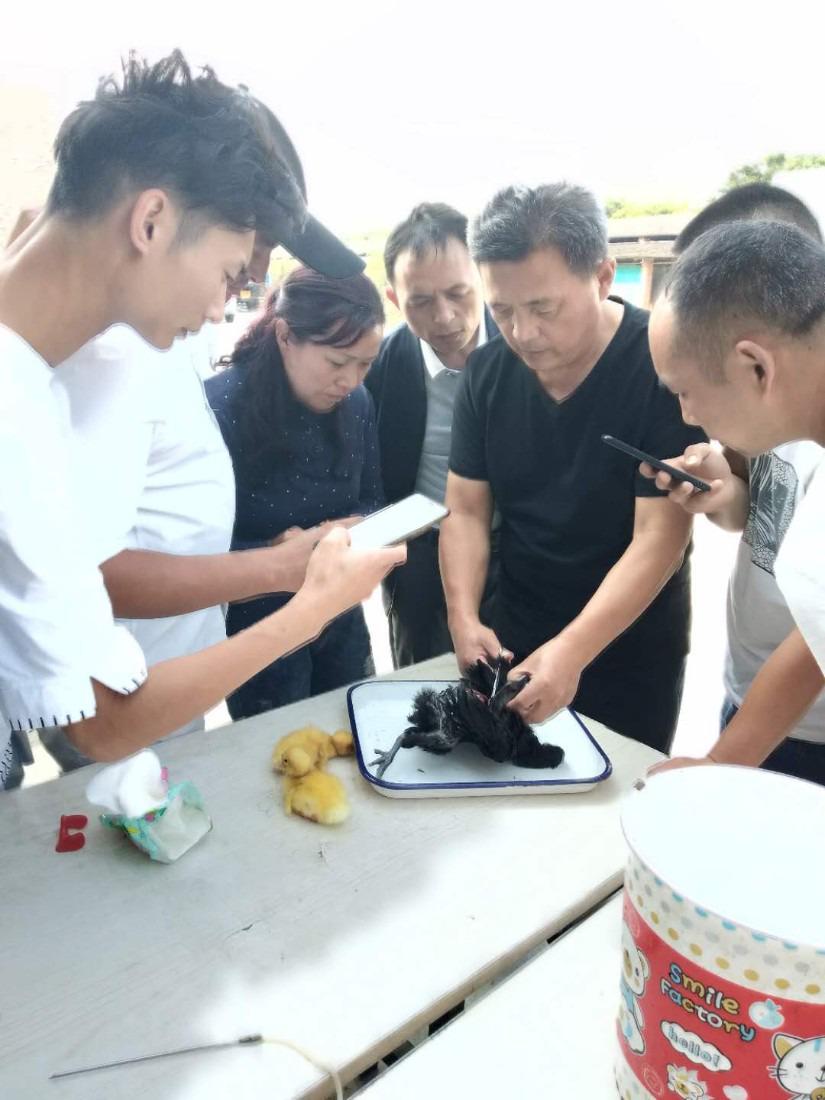 大邑鸡鸭鹅家禽养殖技术学习来广汉中力家禽