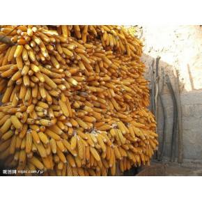 采购玉米、大米、稻谷、碎米
