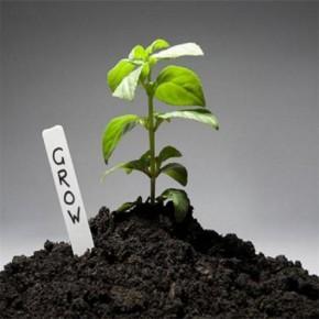 矿物质碳基肥哪家好 有机蔬菜专用矿物质碳基肥 丰夷