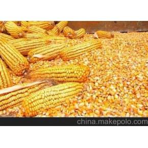 采购大量玉米、小麦、大米、高粱