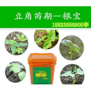 黄瓜养根用啥肥料惠旺根宝液体肥料 养根用根宝保苗壮秧