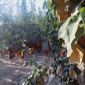 虞城生态水产养殖有哪些 摘吧家庭农场项目齐全