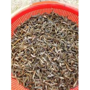湖州泥鰍養殖利潤 養殖周期短 農村養殖創業好選擇