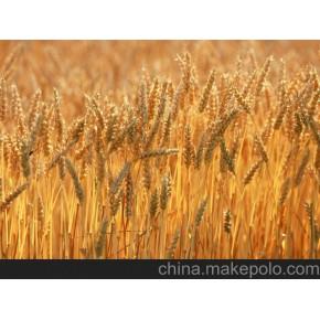 采购小麦、高粱