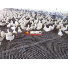 家禽養殖圍欄網 結實耐用 量大優惠