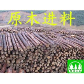 桂林杉木原木收购