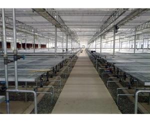 連棟溫室施工 鑫華生態農業 黑河連棟溫室
