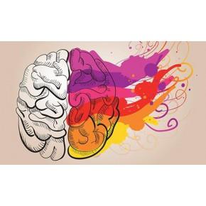 全脑潜能开发是真是假?