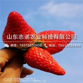 四川万源秘宝草莓苗