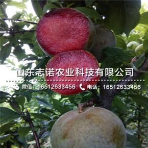 山东志诺农业科技有限公司
