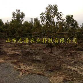 山東志諾農業科技有限公司