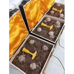 原浆玉液加盟市场保护鹤壁