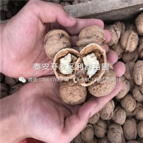 山東薄皮核桃樹苗、山東薄皮核桃樹苗報價及價格